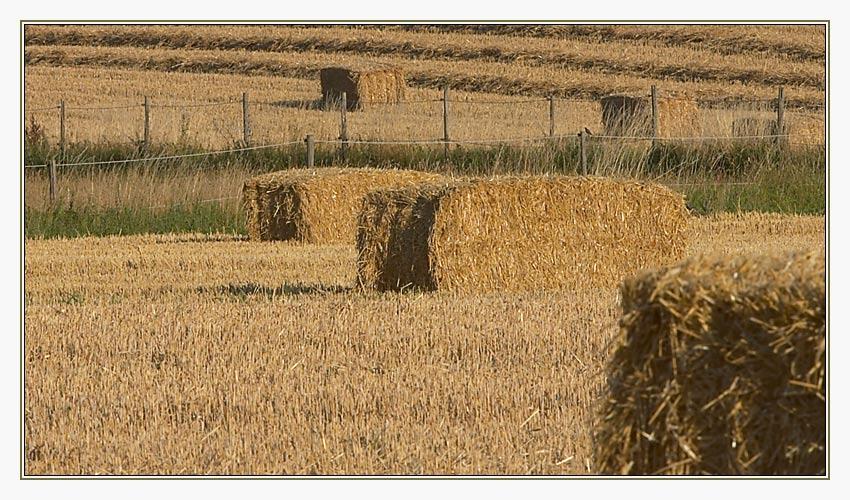 Abgeerntete Felder im Sommer