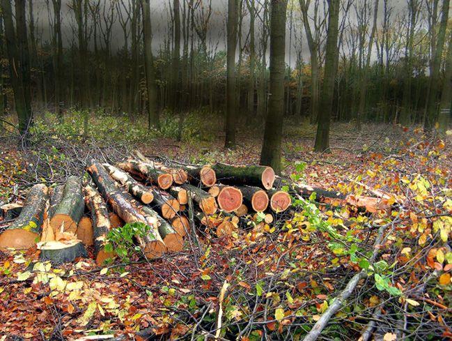 Abgeholzt