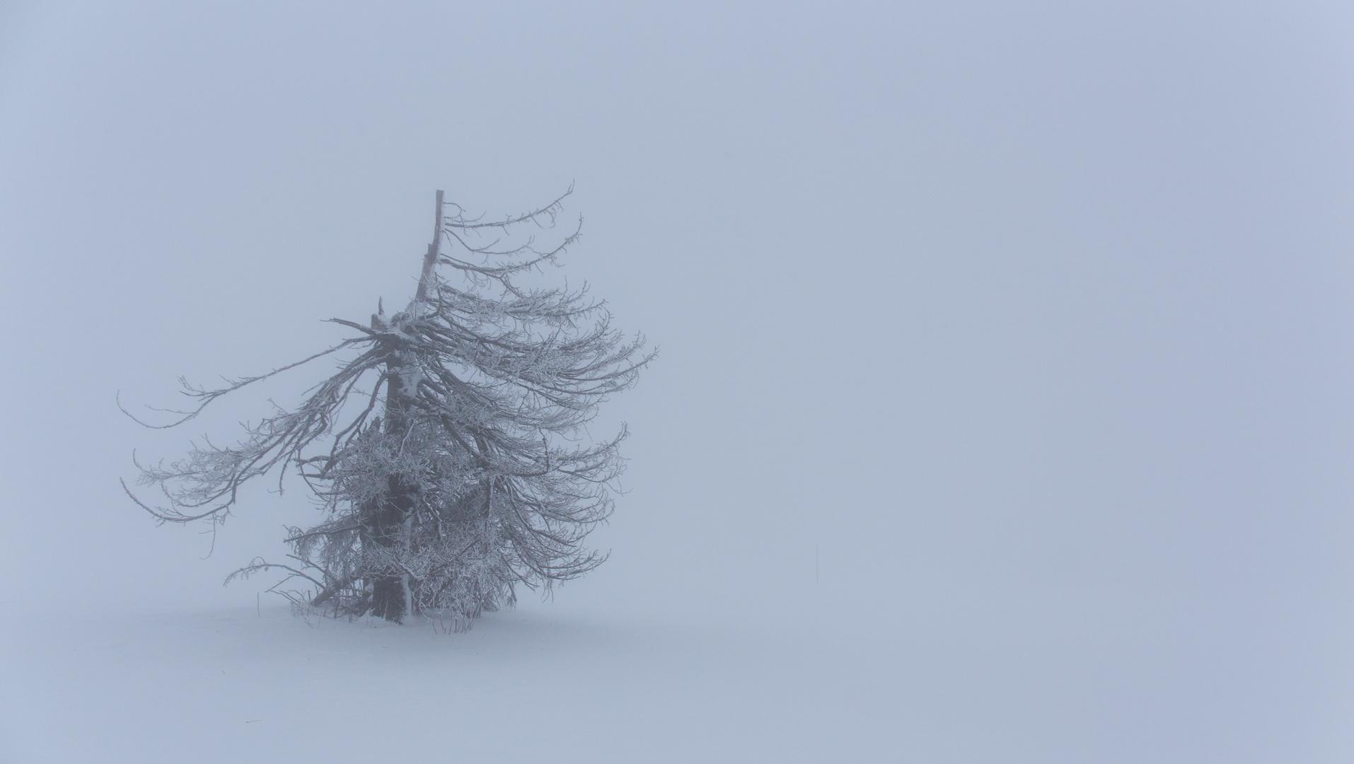 Bäume, Winter, Schnee Bilder