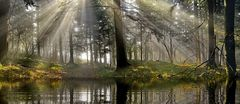 Abkühlung im Wald