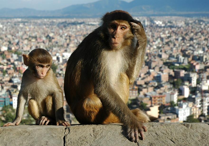 Above Kathmandu