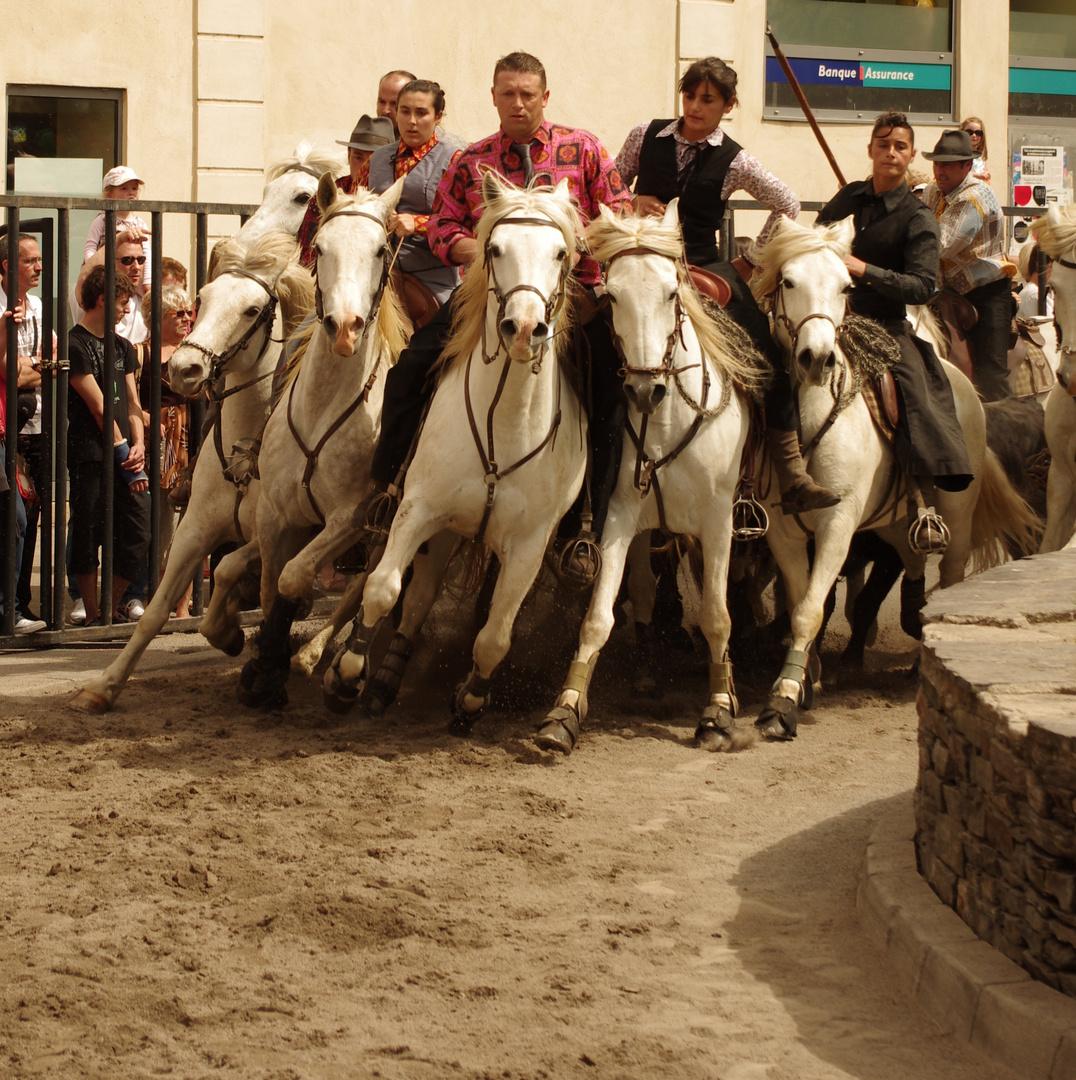 Abrivado, Feria d'Alès, Gard (1)