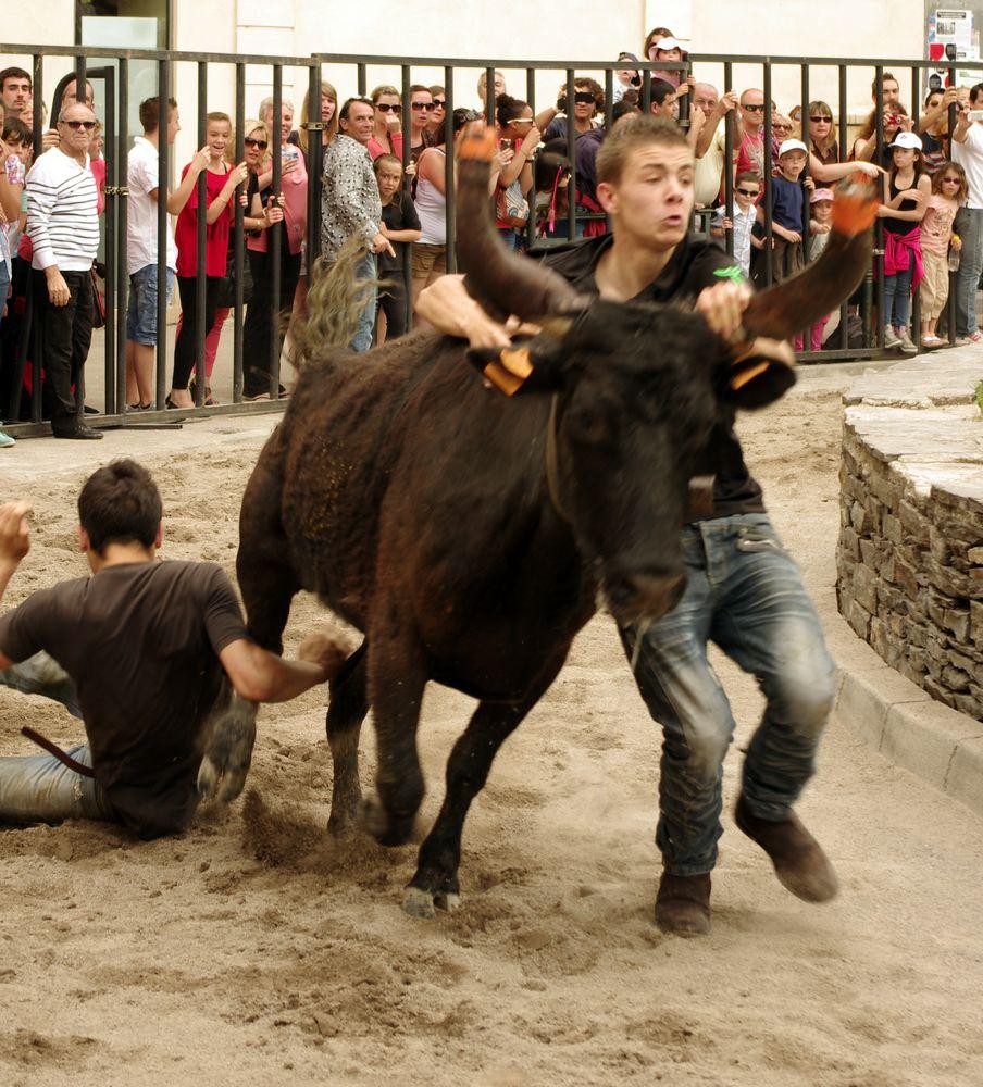 Abrivado, Feria d'Alès, Gard (3)