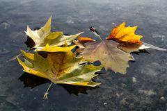 Abschied vom Herbst 2