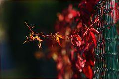 Abschied vom Herbst....