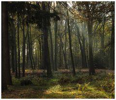 Abschied vom Herbst.....
