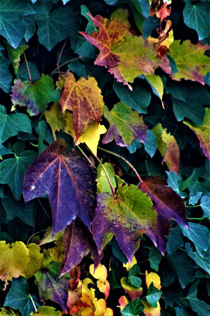 Abschied vom Herbst ,