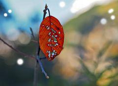 Abschied vom Herbst! - L'automne nous dit au-revoir.