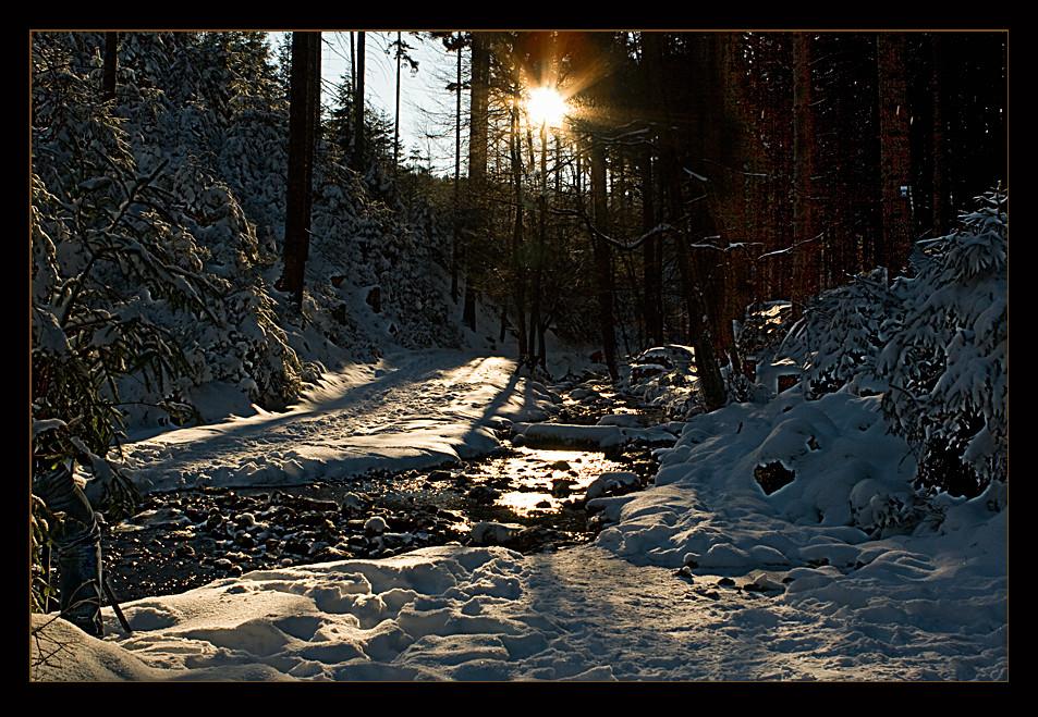 Abschied vom Winterwald..