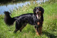 Abschied von einem Traumhund, Clint † 13.10.2011 (geb. 30.07.2008)