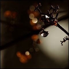 abschiedsblümchen