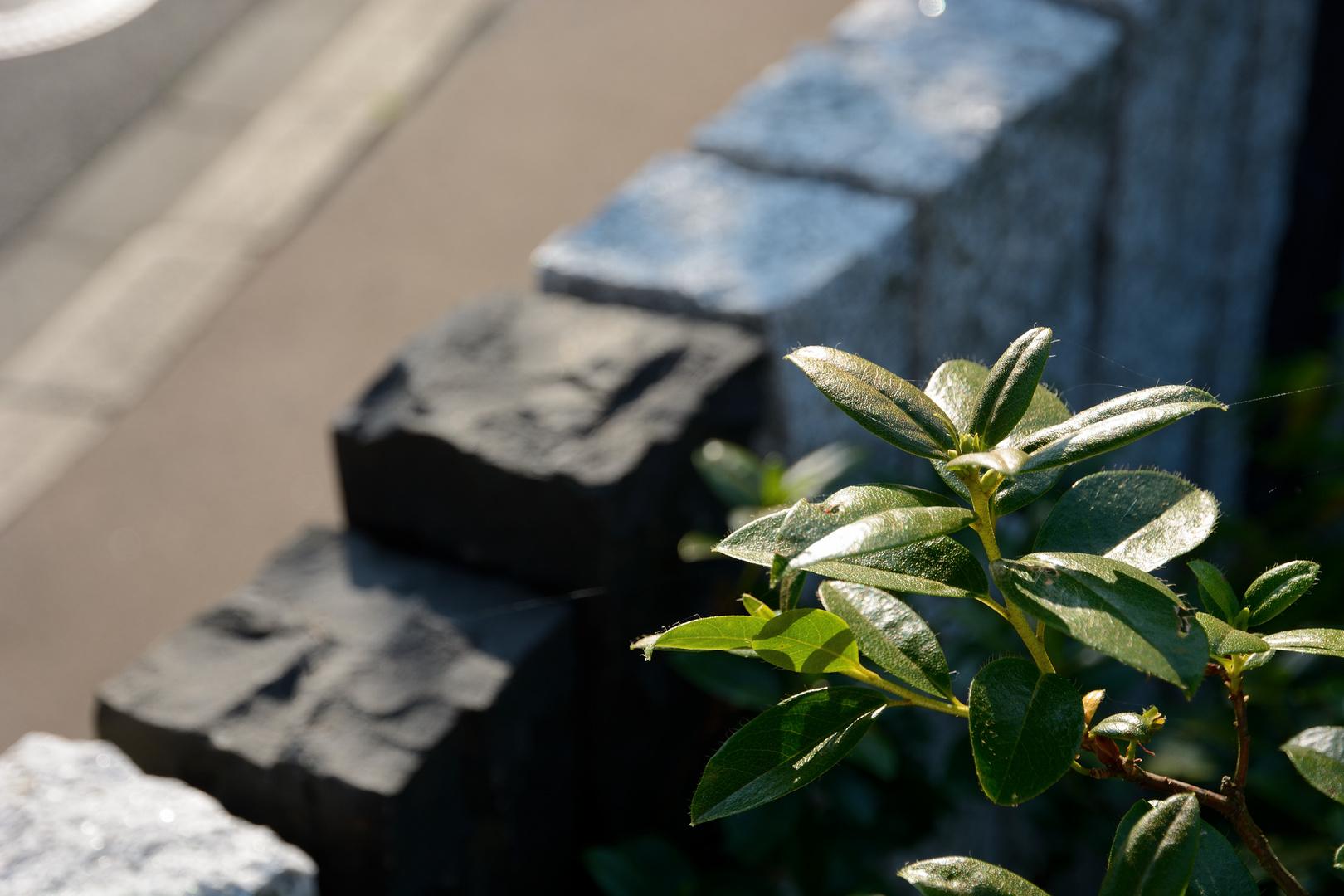 Abschlussmauer im Garten