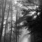 abstecher in den reichswald bei kleve