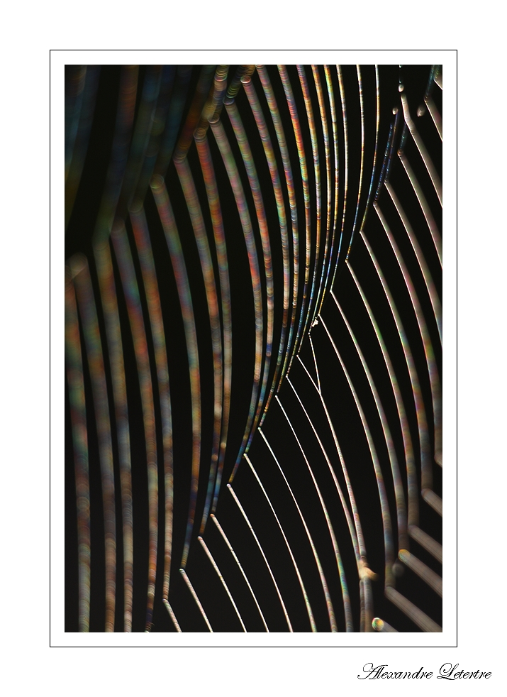 Abstract arachnide