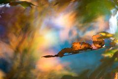 abstract autumn #3