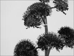 Abstract Blossum