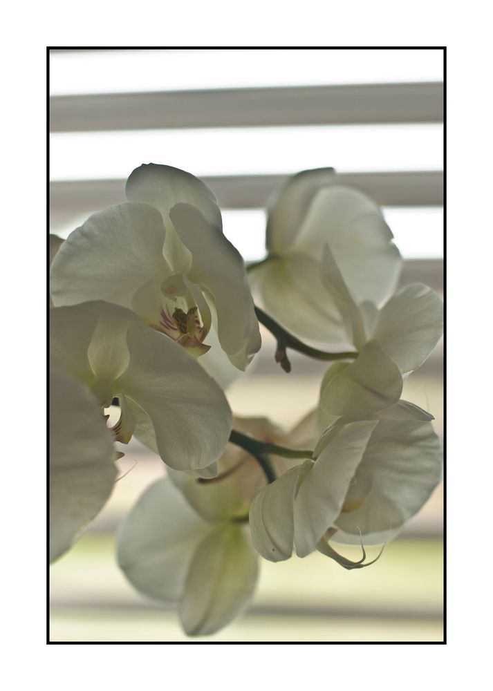 Abstract Orchid
