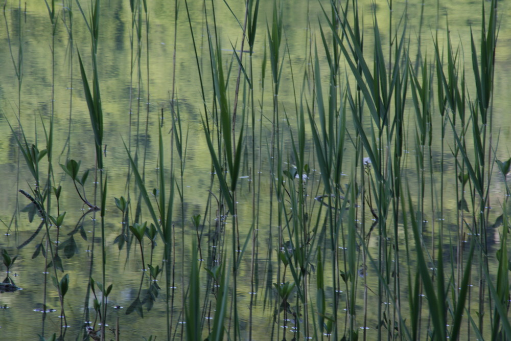 abstrait de Monet