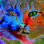 Abstrait tout en couleur Pic à chat... :o))