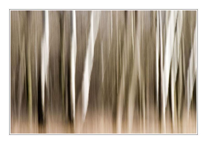 Abstrakte Bäume I