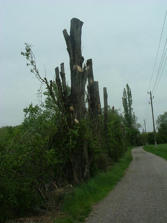 Abstrakte Baumlandschaft in der Eßlinger Furt Au