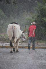 Abzug im Regen Cuba 2014