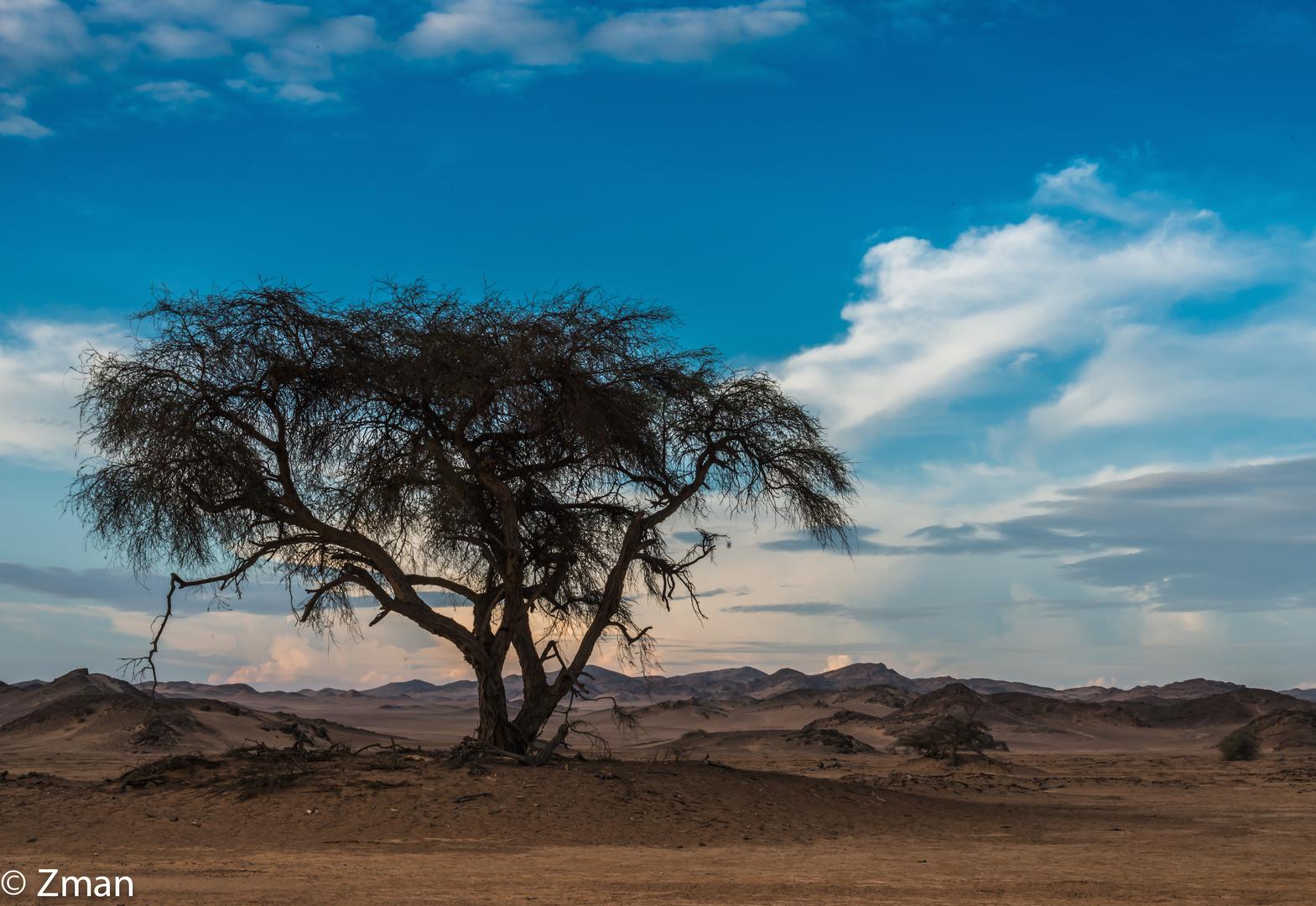 Acacia Tree 01