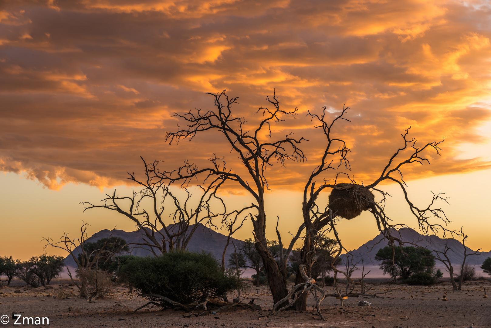 Acacia Trees 02