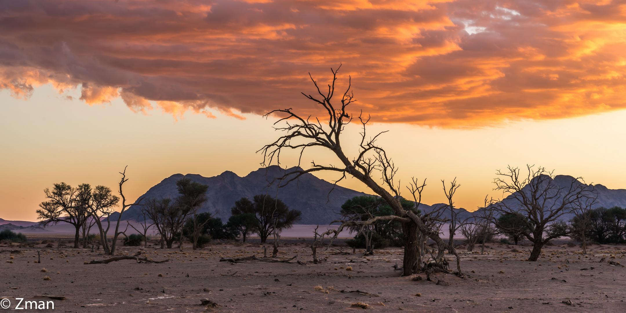 Acacia Trees 03