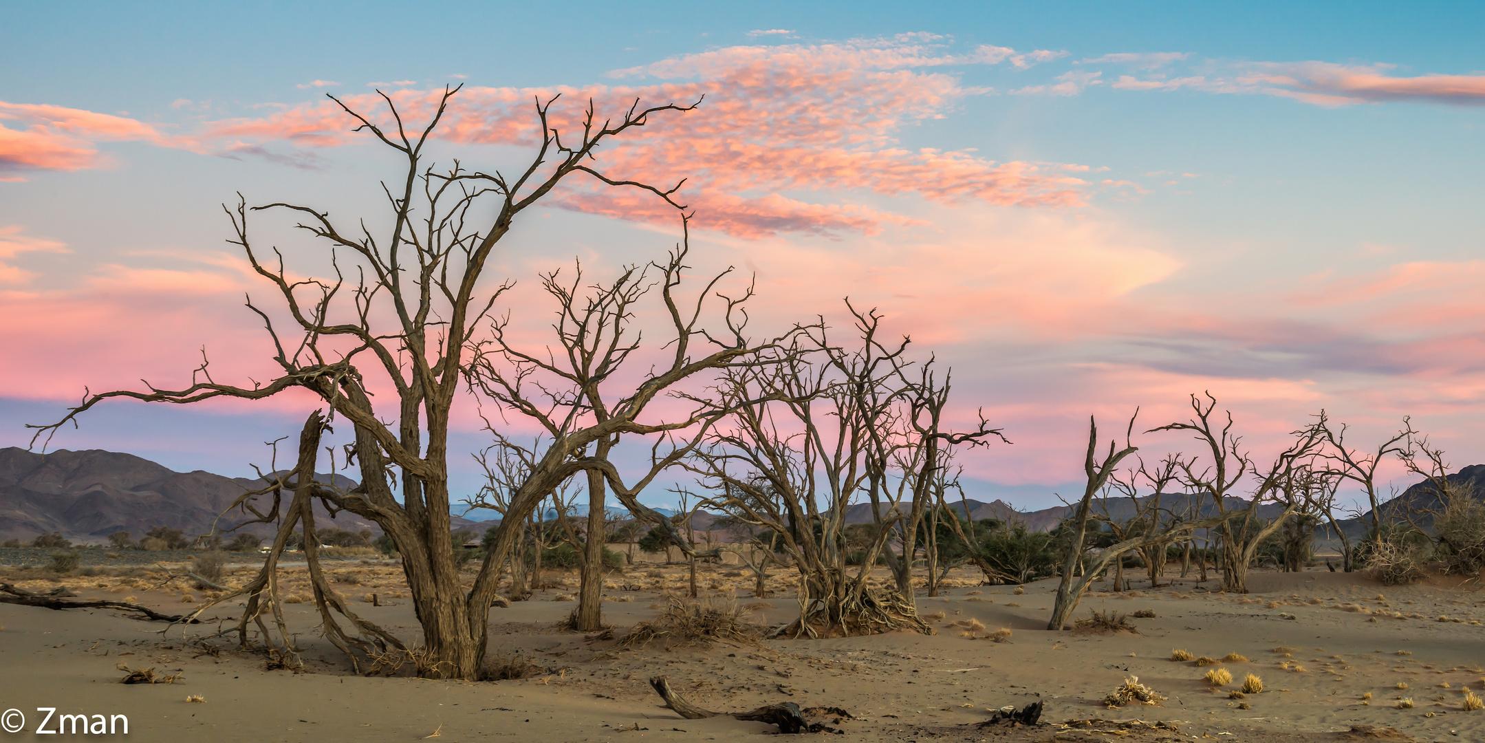 Acacia Trees 10
