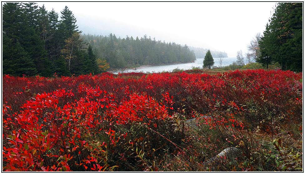 Acadia NP, Maine.
