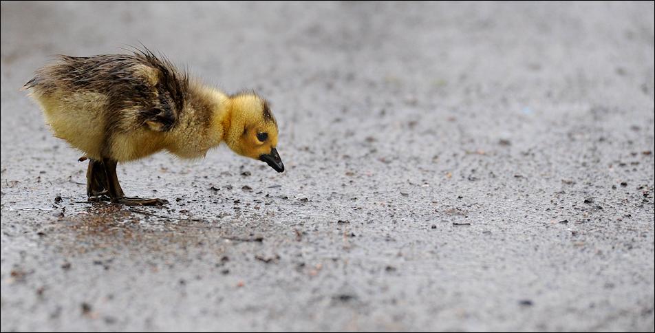 ach wär ich doch ein blindes Huhn...