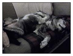 """""""Ach,so ein Sofa ist doch etwas herrliches ! """""""