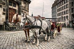 Acht Hufe für Dresden