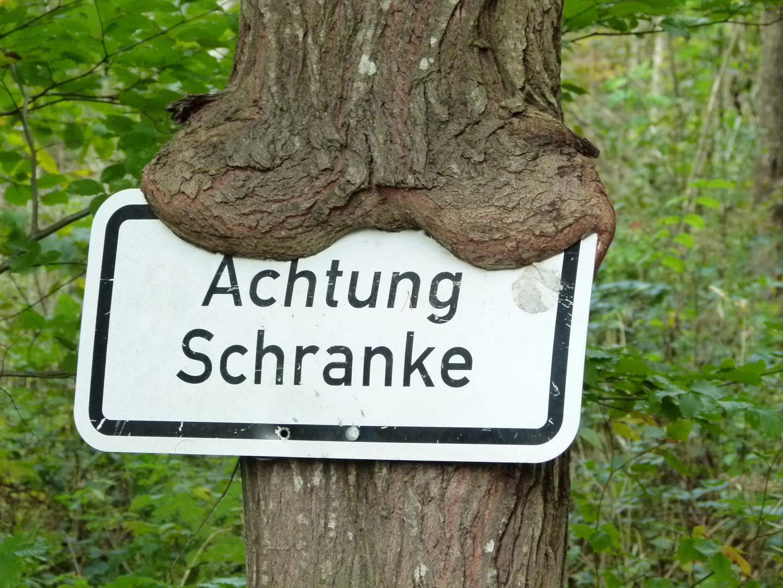 Achtung - Baum lebt