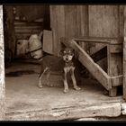 Achtung bissiger Hund