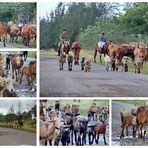 Achtung Gegenverkehr - auf Kubas Straßen