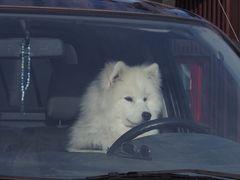 Achtung !   ich bremse auch für Tiere !   P8210620