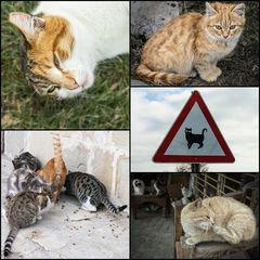Achtung Katzen