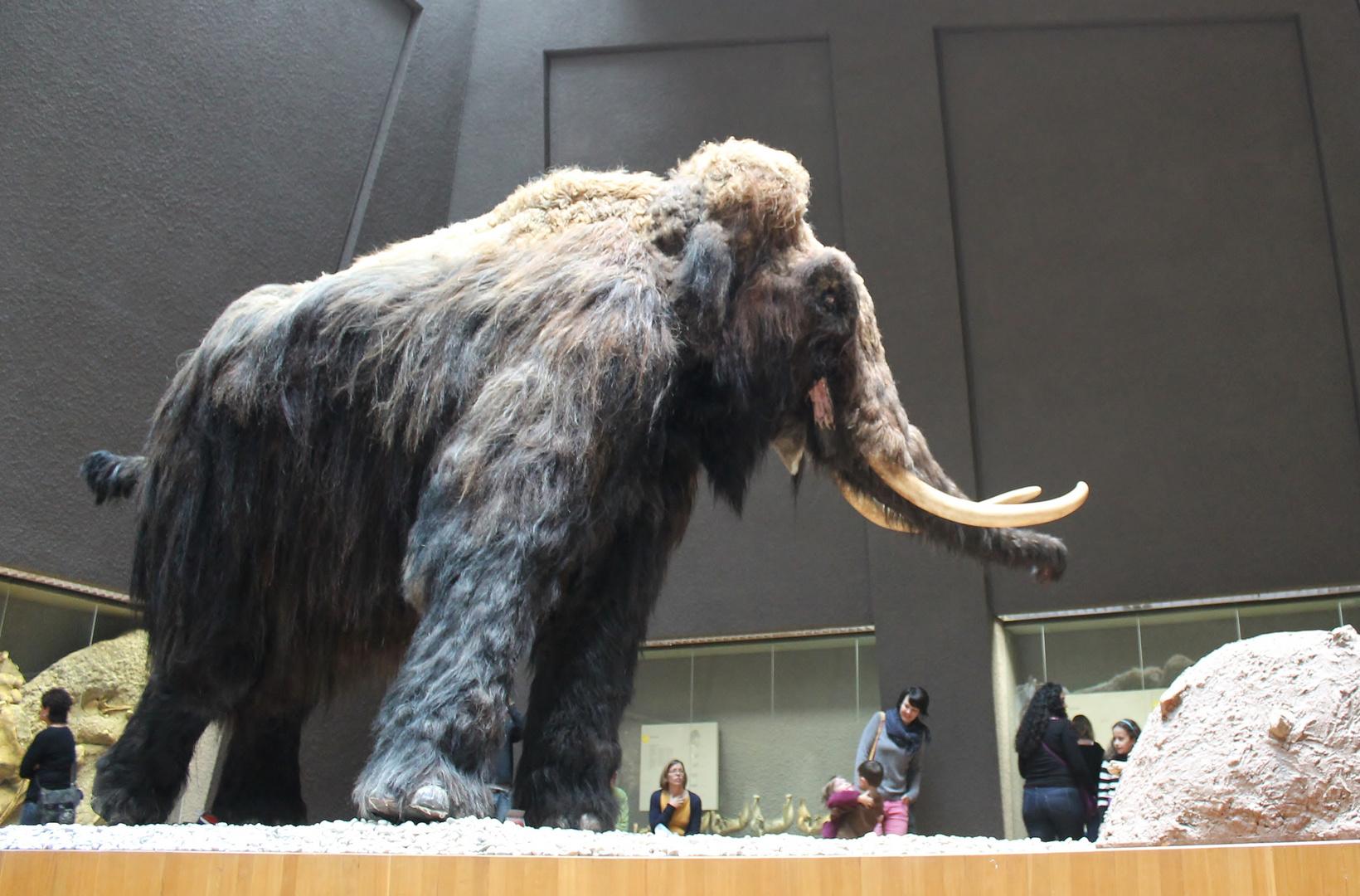 Achtung, Mammut!