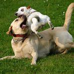 Achtung - tieffliegende Hunde!!!