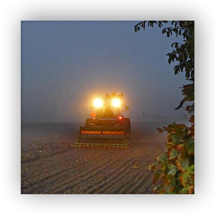 ... Ackergeist im frühmorgenlichen Nebel