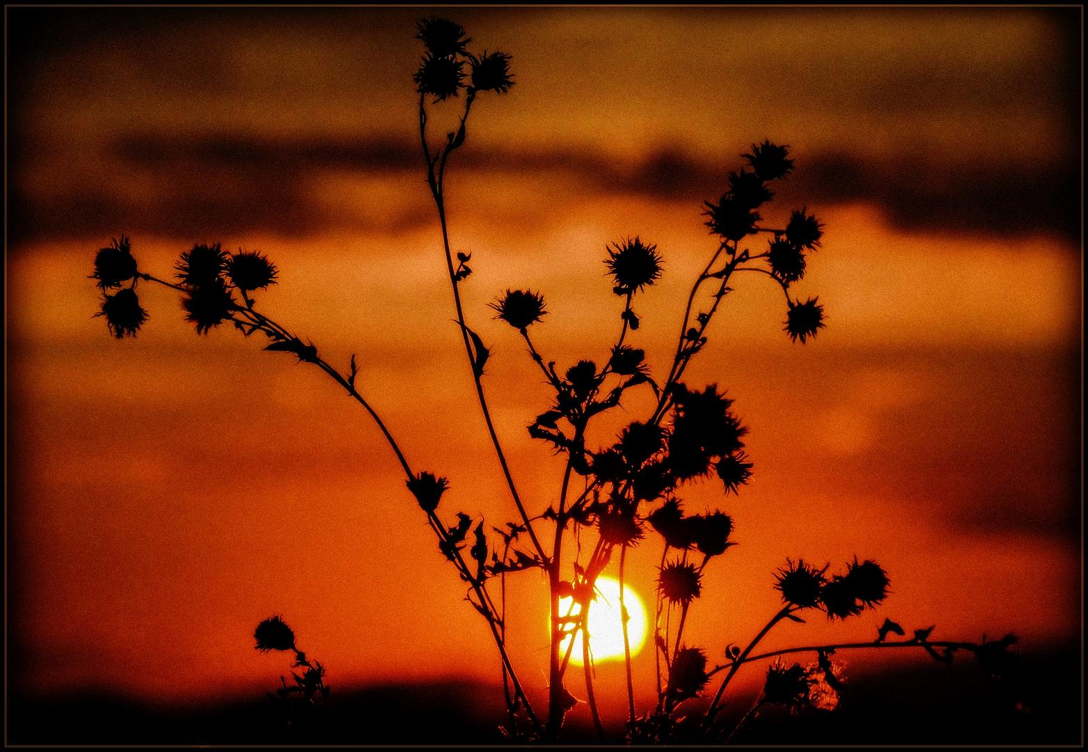 Ackerrain bei Sonnenuntergang