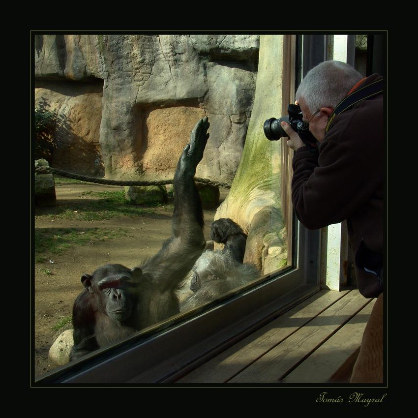 Acoso Fotográfico