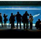 acquario (genova 2010)