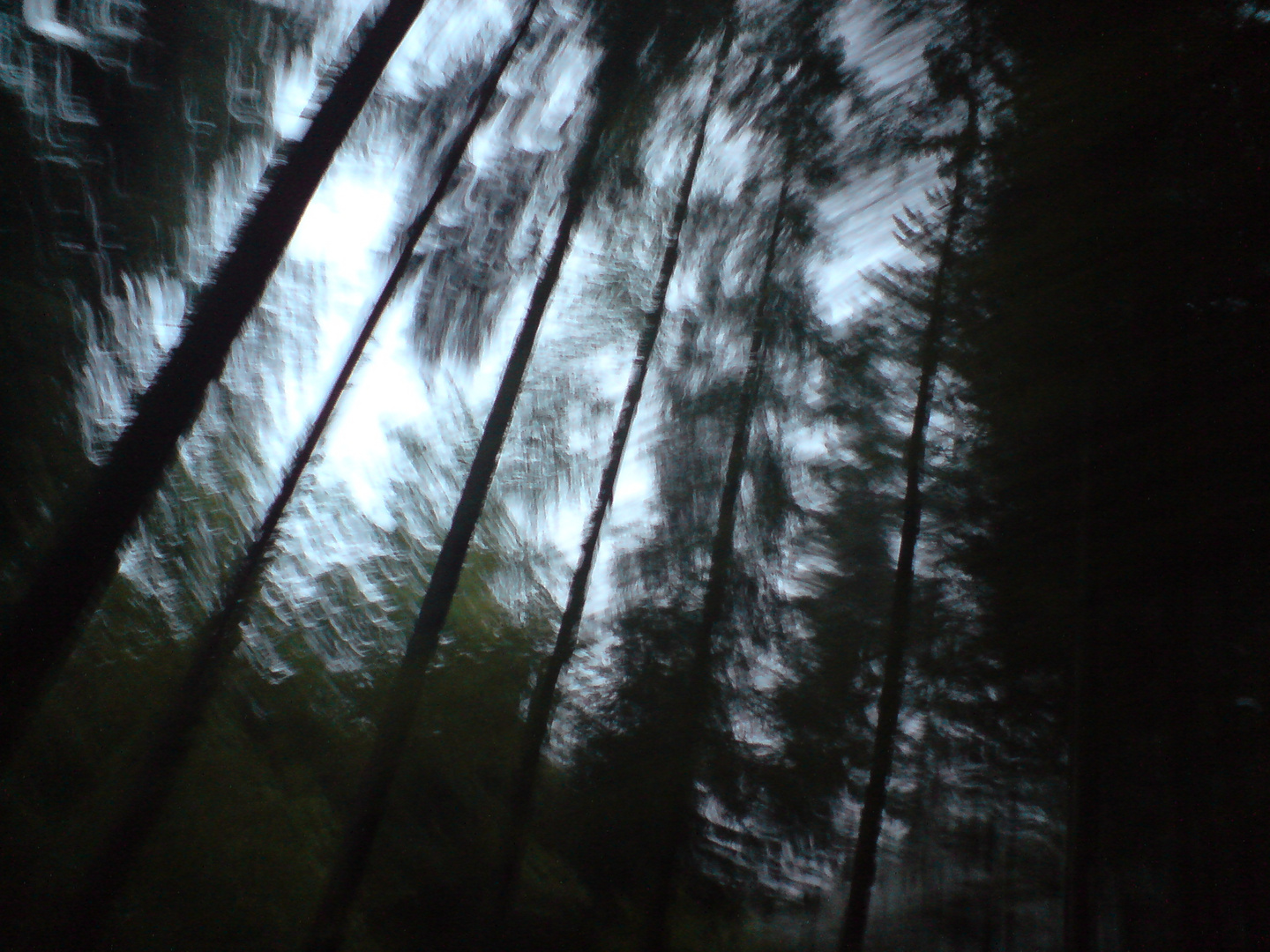 across the forest...