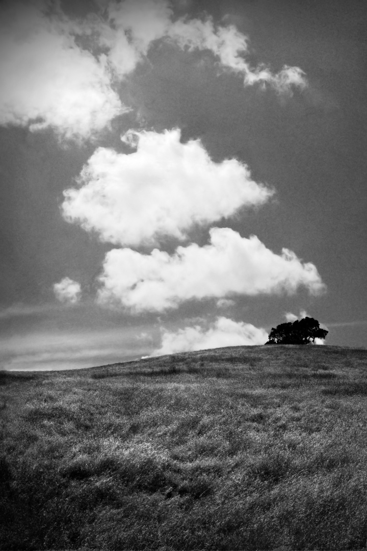 Across the Rustic Clouds