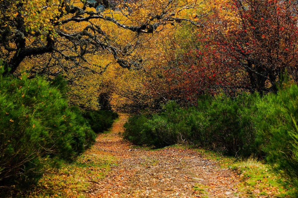 Adentrándose no outono
