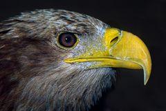 Adler - Analoge Fortografie