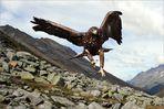 Adler auf Beutejagd